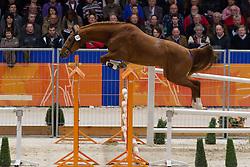 324 - Exeo Fortuna<br /> KWPN Hengstenkeuring - 's Hertogenbosch 2012<br /> © Dirk Caremans