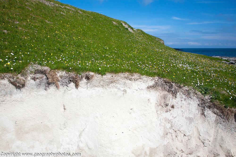 Sandy machair grassland cross section, South Bay, Vatersay island, Barra, Outer Hebrides, Scotland, UK