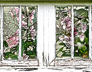 What if flowers bloomed again in the deserted greenhouse?<br /> <br /> Available as a signed and limited edition (100) giclee fine art print from the Foxglove Lane studio only. White border. Signed and numbered on the front. Contact me directly for special requests. Price 70 Euros includes FREE SHIPPING