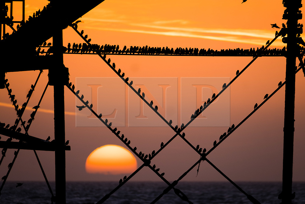 © London News Pictures. 20/02/2018. Aberystwyth, UK.<br /> At sunset on a mild February evening in Aberystwyth, people standing on the pier are  are silhouetted as great clouds  of  tens of thousands of tiny starlings perform murmurations in the sky around them before swooping down to roost for the night, huddled together for warmth and safety,  on the girders and beams underneath the Victorian era seaside pier. Photo credit: Keith Morris/LNP