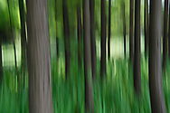 Abstract photography of a Planted Pine forest, East Lake Greenway park, Wuhan, Hubei, China