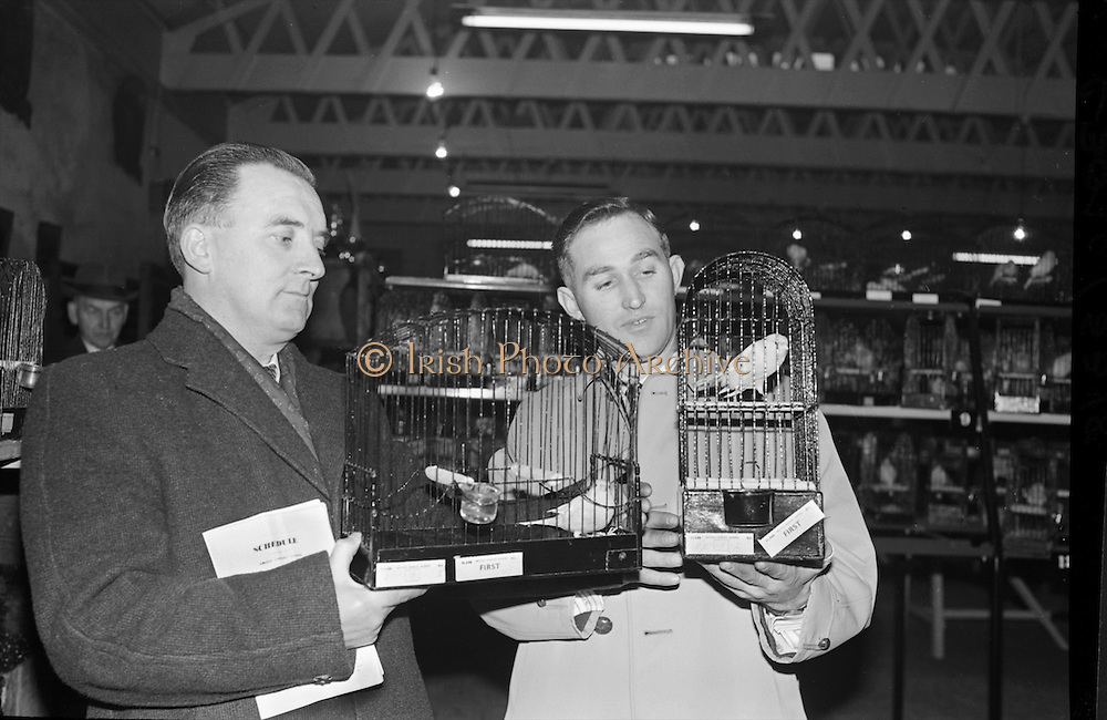 'I don't fancy your bird!' Prizewinners at the 16th annual Canary Show, Connolly Hall.` .20.12.1963