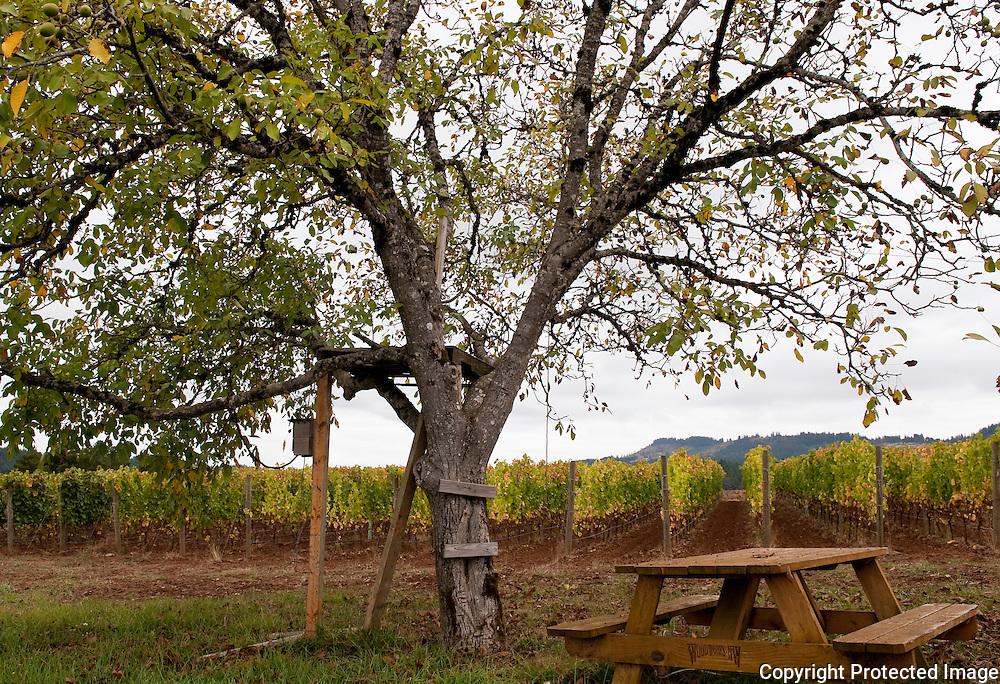 deLancellotti Vineyard House, Yamhill-Carlton, Willamette Valley, Oregon