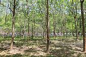 0309 | Stage 2 -  Alor Setar to Sungai Petani (185 km)