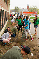Laconia High School seniors spent Saturday doing clean up around the school grounds to make up for extra snow days to keep with their schedule graduation date of June 6th.   (Karen Bobotas/for the Laconia Daily Sun)