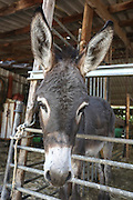 Donkey in a petting zoo