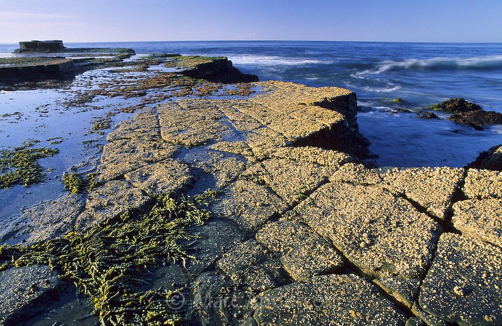 Eroded rocks, Thelma Head, Royal National Park, Australia.