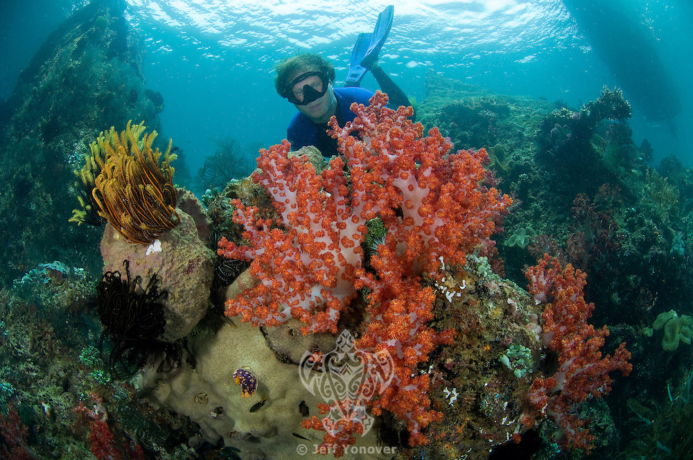 Freediver and Soft Corals.