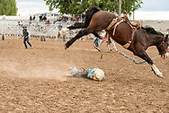 Saddle Bronc, Louie Brunson bucked off by James Bond, Miles City Bucking Horse Sale, short go-round, Miles City, Montana