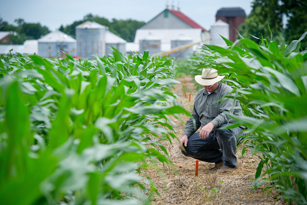 Farmer checking markers in rows of corn crops
