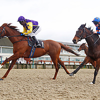 Lingfield 1st February 2013