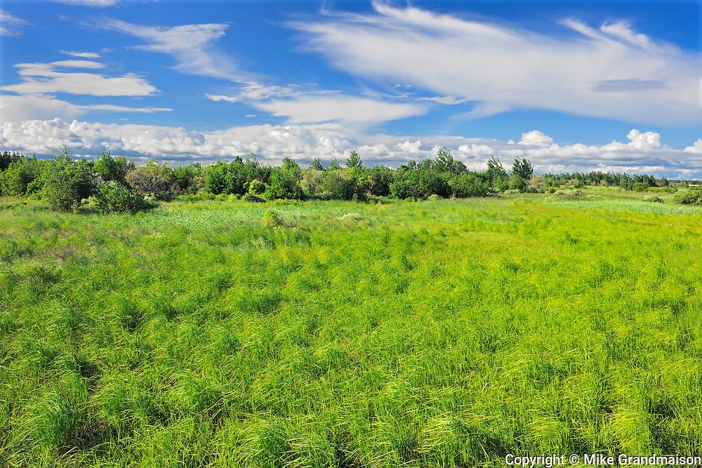 Marais de Tikouamis (Marsh)<br /> Saint-Méthode<br /> Quebec<br /> Canada