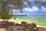 Aldabra Atoll, The Seychelles<br /> View through pine trees to emerald coloured<br /> sea and distinctive 'champignon' rocks<br /> c. Ellen Rooney