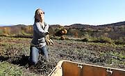Student Julia Christensen helps harvest organic potatoes