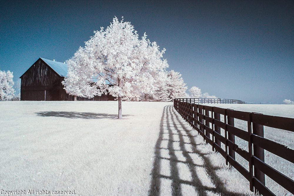Infrared (IR) image - This is one of the barns on the Keeneland property.  I'm including the blue sky process here but I also have versions with every other processing technique I've ever tried for this image.  I like the hard shadows that the fence and tree cast on the white grass.