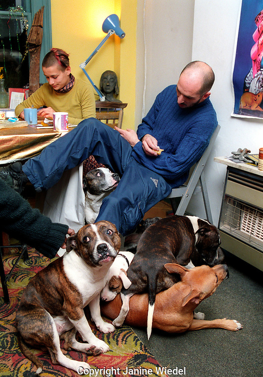Portrait of man with family of Staffordshire terriers living in a south London squat.