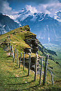 Shreckhorn is seen from First, above Grindelwald Valley in Switzerland, the Alps, Europe. Grindelwald can be reached by train (Berner Oberland Bahn) from Interlaken. The Bernese Highlands are the upper part of Bern Canton.