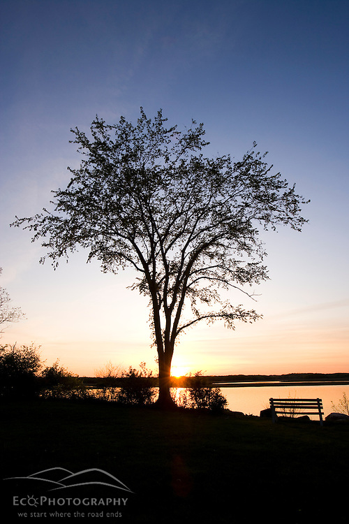 Elm tree and bench silhouette at the Strawberry Hill Preserve in Ipswich, Massachusetts.  Sunset.  Eagle Hill River.