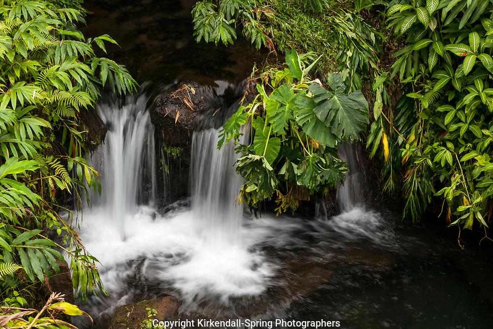 HI00242-00...HAWAI'I - A small water fall in Akaka Falls State Park on the island of Hawai'i.