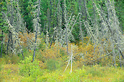Wetland in boreal forest<br /> Gillam Road<br /> Manitoba<br /> Canada
