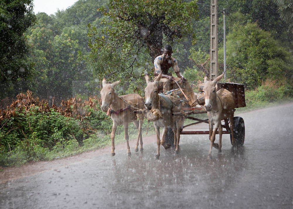 © Licensed to London News Pictures. 05/07/2013. Koulikoro,  Mali.  A young African boy and his donkeys are caught in a heavy downpour in Mali today.  The country has now entered it's rainy season.   Photo credit: Alison Baskerville/LNP