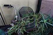 Kawasaki, November 21 2014 - In the garden of Japanese artist Tatsumi ORIMOTO's home.
