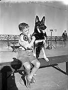 16/08/1952<br /> 08/16/1952<br /> 16 August 1952<br /> <br /> Mater Rodney Ross, son of Mr R Ross, Queen St., Ballymoney, with Mr W Murphy's German Shepherd Dog 'Koleen of Wolfhill' at Bray Dog Show (Winner best in show)