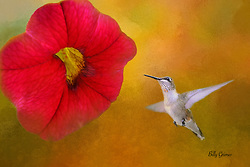 Flower and Humming Bird Screen Saver