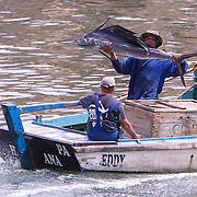 A proud fisherman shows off a marlin caught on the waters off Havava. The small fishing boat motor into port on the River Almendares. Fishing is not only a favorite pastime for Cubans but it is also an income source. Fishermen looking for a catch near the mouth the river Almendares.   Photography by Jose More