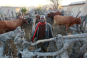 Farmer William Hlangwane had grazed his cattle on Sekuruwe's agricultural land for 25 years. He received R4000 compensation. He now takes he cattle to graze in other villages moving from site to site. When asked how this arrangement was working out he said 'we are struggling we don't have enough food'.<br />