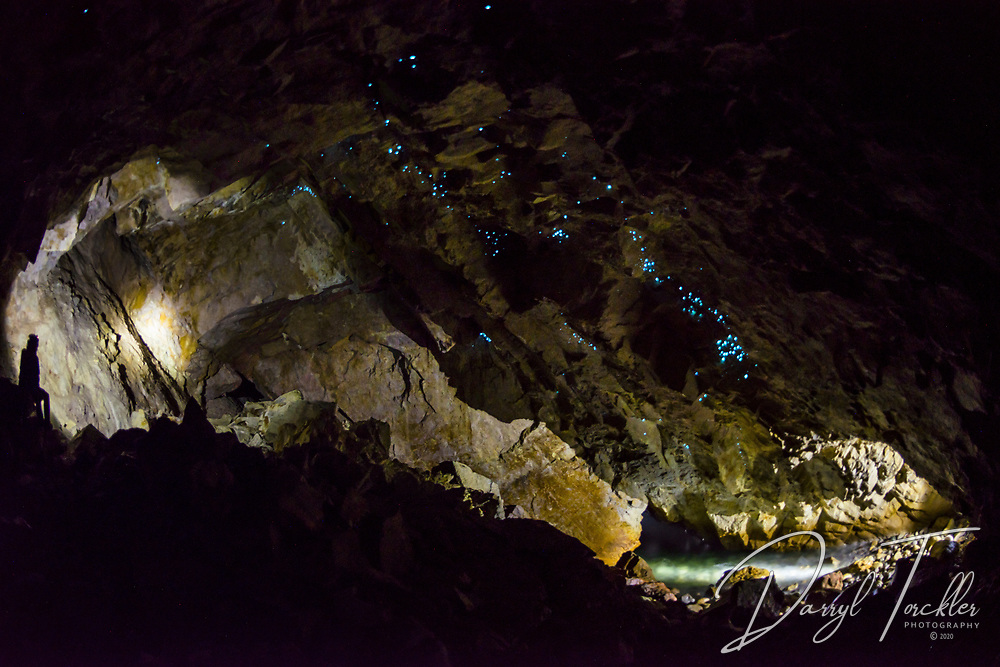 Glow worms in the back of Catherdral sea cave, Arid Island. New Zealand