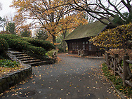 Autumn colors at shakespeare Garden in Central Park, New York City