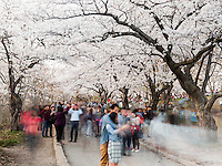 http://Duncan.co/10-seconds-of-cherry-blossoms/