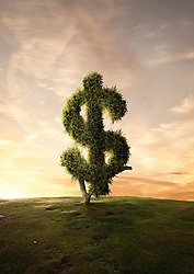 Aug. 2, 2013 - Topiary tree financial symbol Dollar sign (Credit Image: © Matt Walford/Cultura/ZUMAPRESS.com)