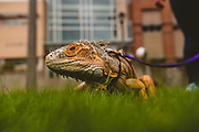 A biology department pet. (GU photo by Zack Berlat)