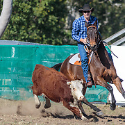 Wingham Campdraft, Showgrounds, Wingham, New South Wales, Australia