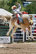 061811-Evergreen, COLORADO-evergreenrodeo-Micky Downare, of Hartsel, CO, gets a re-ride during the Evergreen Rodeo Saturday, June 18, 2011 at the El Pinal Rodeo Grounds..Photo By Matthew Jonas/Evergreen Newspapers/Photo Editor