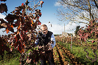 GUAGNANO, ITALY - 10 NOVEMBER 2016: Gianvito Rizzo (53), inventor of the sommelier courses at Lecce prison and chief executive officer at the Feudi di Guagnano, the wine cellar that offered their wines for the classes, checks the vineyard of San Gaetano Thiene, a district of Guagnano near Lecce where the Negramaro wine is produced, Italy, on November 10th 2016.<br /> <br /> Here a group of ten high-security female inmates and aspiring sommeliers , some of which are married to mafia mobsters or have been convicted for criminal association (crimes carrying up to to decades of jail time), are taking a course of eight lessons to learn how to taste, choose and serve local wines.<br /> <br /> The classes are part of a wide-ranging educational program to teach inmates new professional skills, as well as help them develop a bond with the region they live in.<br /> <br /> Since the 1970s, Italian norms have been providing for reeducation and a personalized approach to detention. However, the lack of funds to rehabilitate inmates, alongside the chronic overcrowding of Italian prisons, have created a reality of thousands of incarcerated men and women with little to do all day long. Especially those with a serious criminal record, experts said, need dedicated therapy and professionals who can help them.
