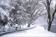 A view of Central Park during a snowstorm<br /> New York City, U.S.A. Winter in New York