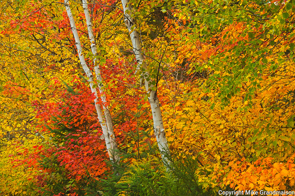 Autumn  colors at Lac Wapizagonke. Great Lakes - St.  Lawrence Forest Region.<br />