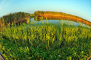 Marsh reeds blowing in wind at Marshland pond at dusk on hilltop at Long Island's Levy Park and Preserve; in Merrick; New York; USA; on August 20; 2011. taken with 180 degree fisheye lens.