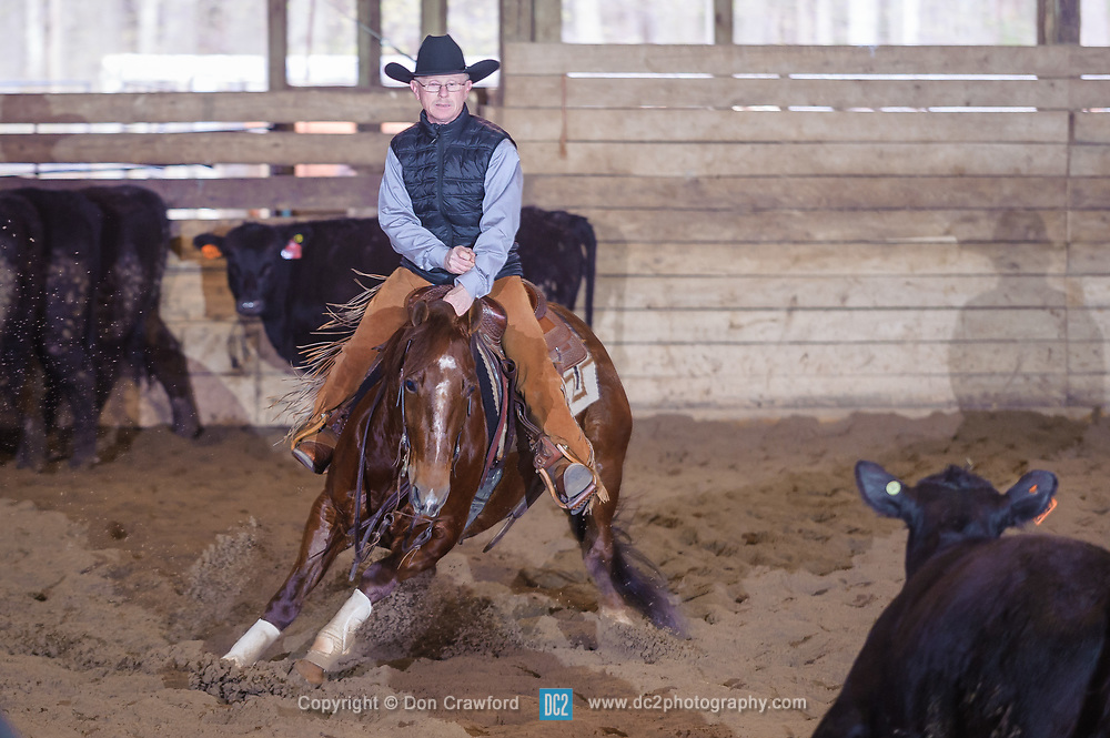 April 30 2017 - Minshall Farm Cutting 2, held at Minshall Farms, Hillsburgh Ontario. The event was put on by the Ontario Cutting Horse Association. Riding in the 5,000 Novice Horse Class is Brian Kelly on Oklahoma Redneck owned by Ron Stelzl.