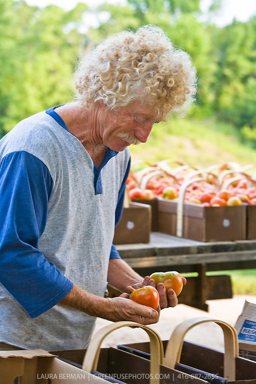 Organic farmer, Ted Thorpe, sorts and grades his heirloom tomatoes.