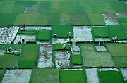 People working in the rice paddies in the suburbs.