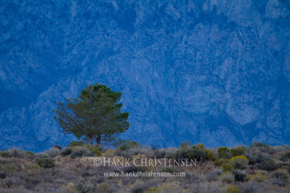 A lone tree is dwarfed by the distant cliffs of the eastern Sierra.  In the shadow of the mountains, the tree is cast in a cool blue hue.