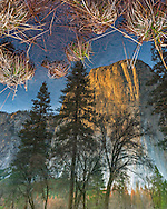 El Capitan reflected in the Merced River, Yosemite Valley, Yosemite National Park, California