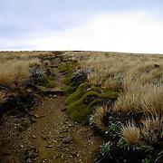 High trail through the Kahurangi, South Island, New Zealand. Photo by Jen Klewitz