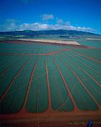 Pineapple fields, Lanai, Hawaii<br />