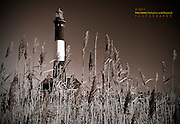 A Sepia Version of the Fire Island Lighthouse Through The Reeds