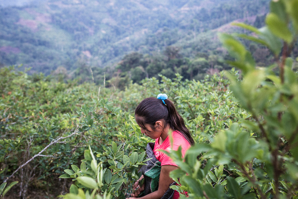 Reida Tineopa, 21 years old, are day laborer on the coca fields in Vrae. Her dream is to save enough money so she and her husband could buy a piece of land. They would still need to sell their workforce but their everyday life would be a little bit easier for the young couple and their one-year-old son.